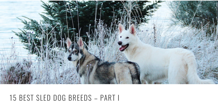 best sled breeds HEADER