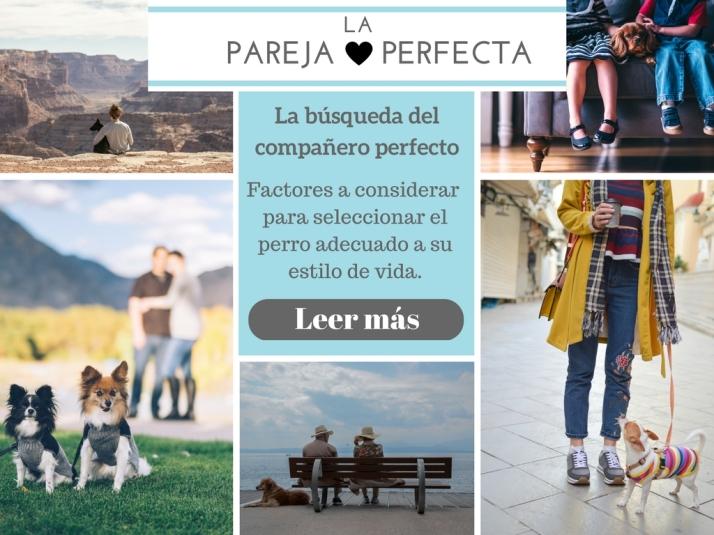 La pareja perfecta. La búsqueda del compañero perfecto. Factores a considerar para seleccionar el perro adecuado a su estilo de vida. Tips para encontrar la mascota perfecta. Leer más