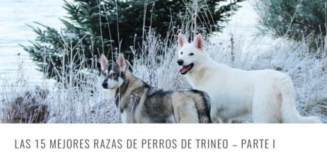 RAZAS TRINEO 1 HEADER
