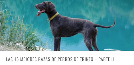 RAZAS TRINEO 2 HEADER