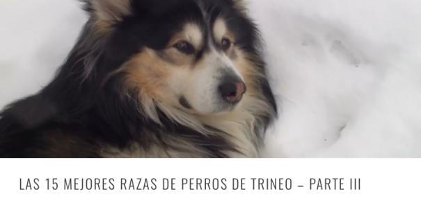 RAZAS TRINEO 3 HEADER