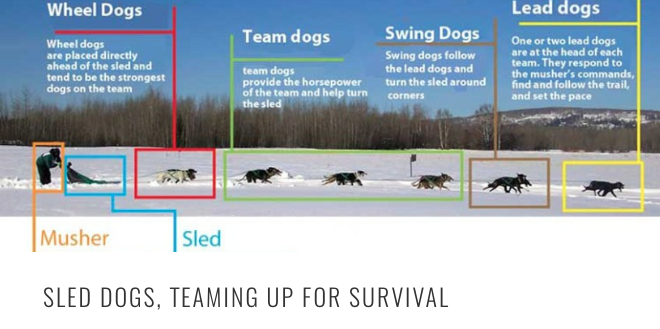 sled dog teaming HEADER