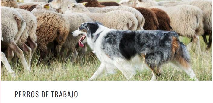 WORKING DOGS ESP PERROS DE TRAB HEAD.png